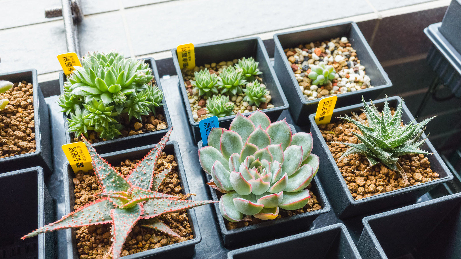 多肉植物成長紀錄