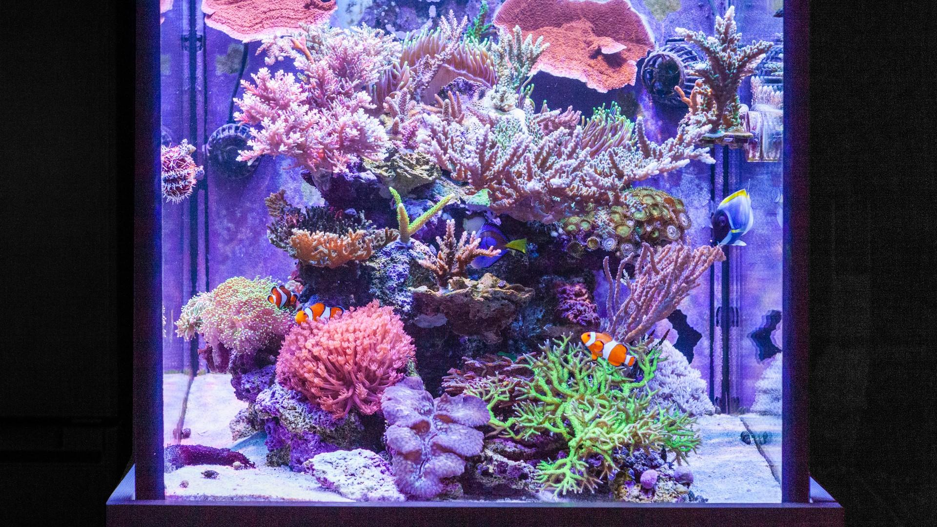 海水缸紀錄(滿 3 年 1 個月又 17 天)
